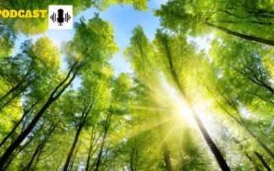 #PODCAST La filière forêt bois : un enjeu économique majeur pour le Crédit Agricole